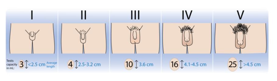 inustexnicp: 14 cm penis