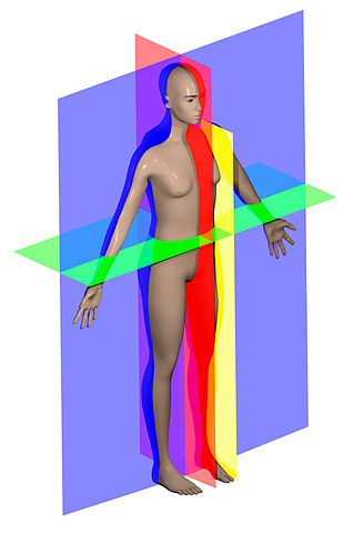 328px-Human_anatomy_planes.jpg