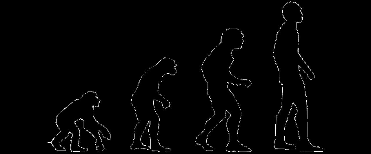 evolution-2780651_1280.png