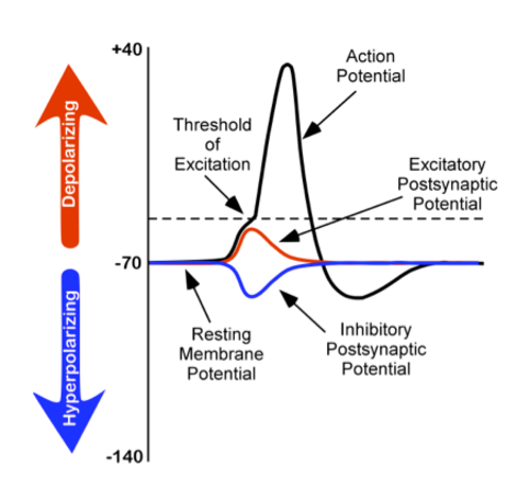 postsynaptic potential vs action potential