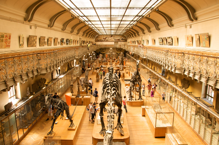 A view down the main hall of the Paris Natural History Museum showing several dinosaur skeletons as well as many cases of other specimens.