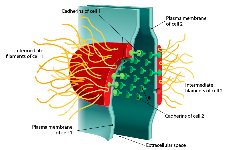 Anatomy and Physiology in Context | Reading Assignment: Cell