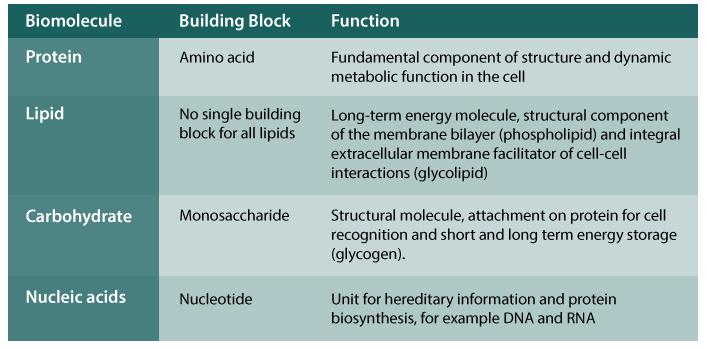 ANP01_BiomoleculesTable.jpg