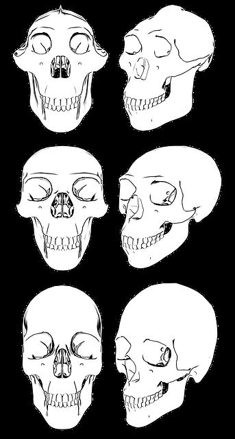 skull-3282885_640.png