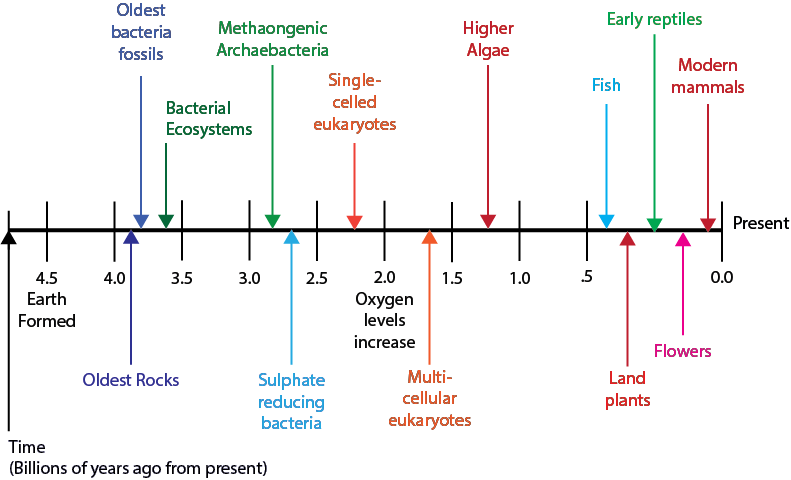 Ch4_Cells Timeline  figure 4.3.png