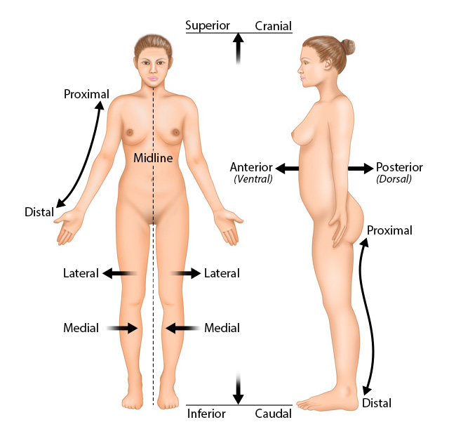 Anatomy and Physiology in Context | Reading Assignment