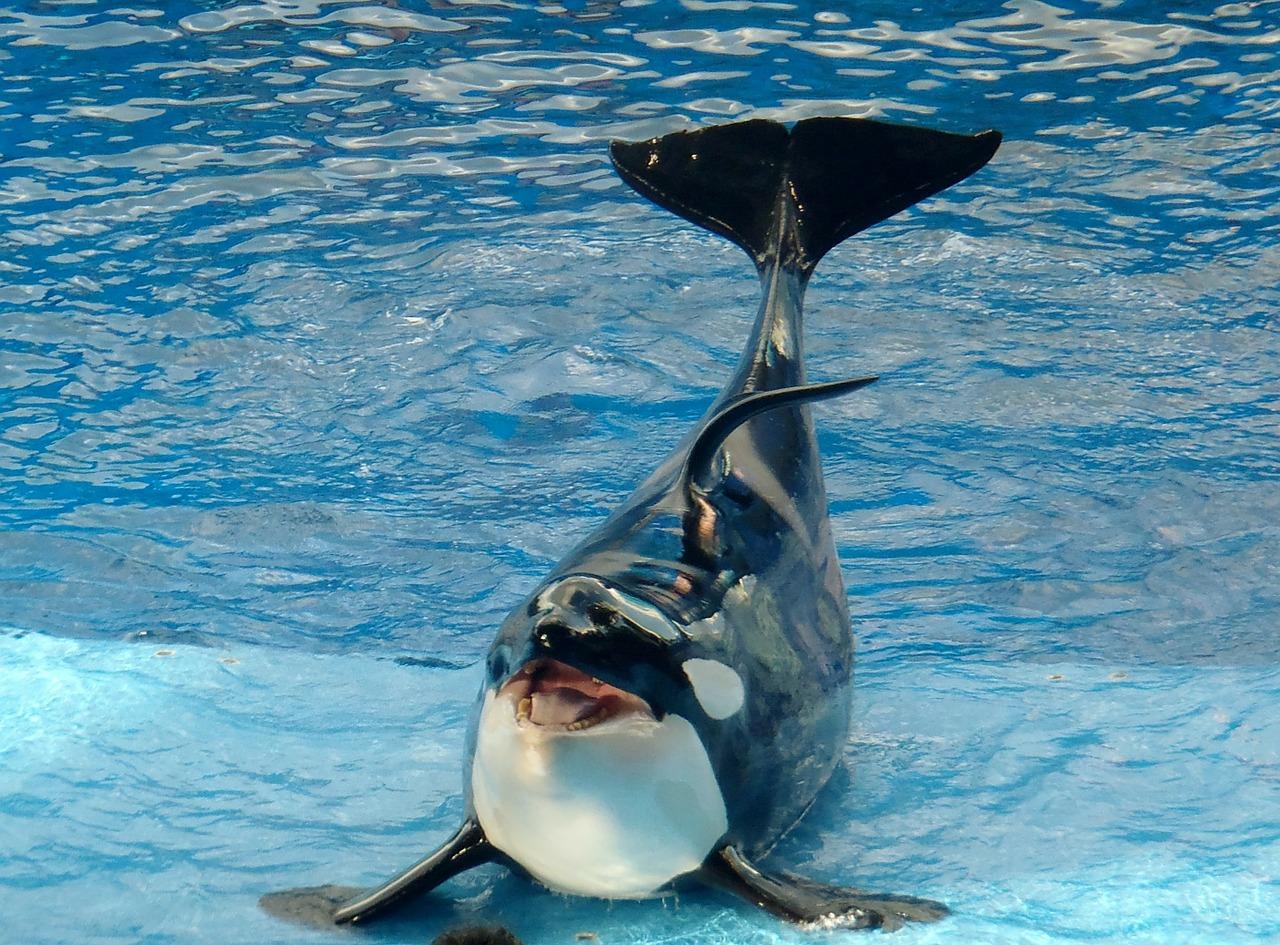 whale-243920_1280.jpg