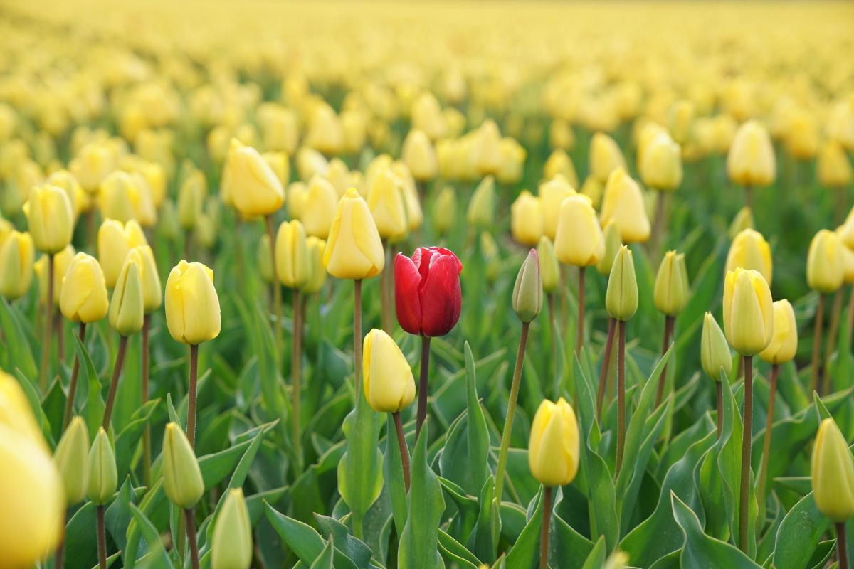 Red Flower Yellow Flowers.jpg