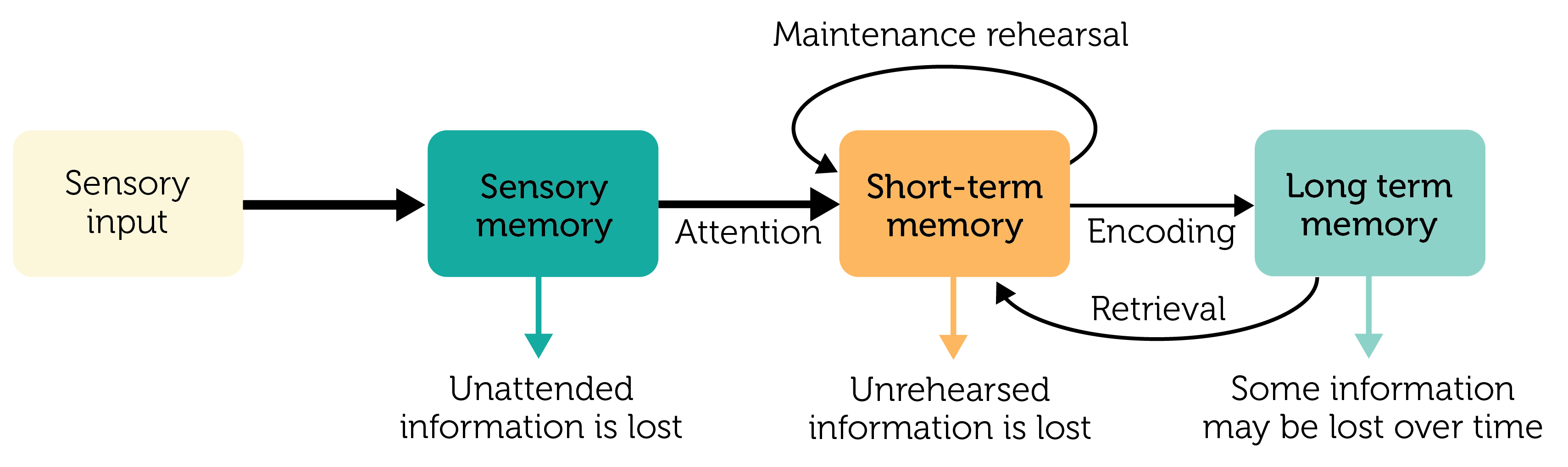 Fire And Ice Memory And Forgetting >> Cognitive Psychology Reading Assignment Long Term Memory Top Hat